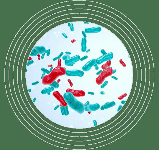 Comunidad microbiana