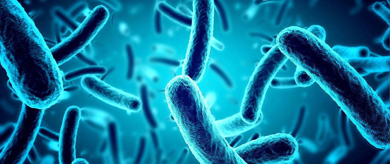 Bacterias Orales