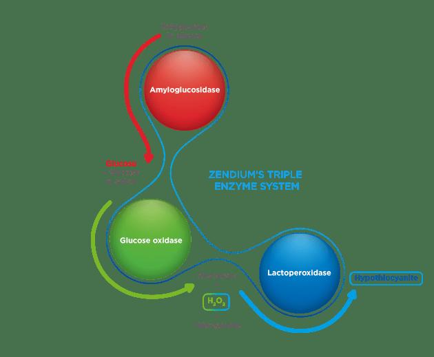 el triple sistema enzimático de zendium